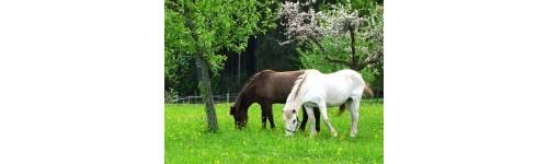 Kräutergarten der Pferde